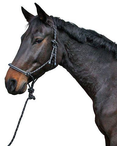 Hofman Knopen halster incl. touw zwart
