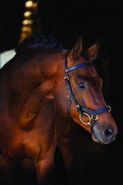 Horseware Rambo Micklem Multi