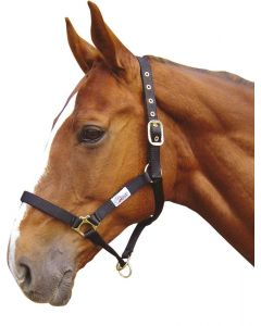 Harry's Horse Halster controller