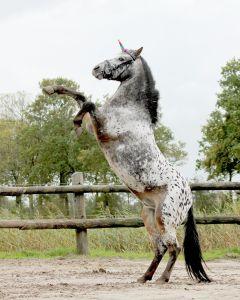 QHP Eenhoorn hoorn