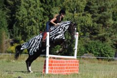 Bucas Riding-Rug-Zebra