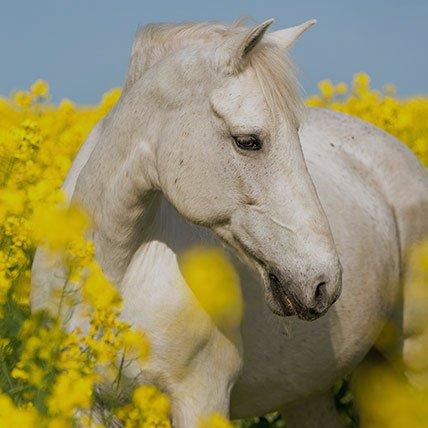 Dekens vanaf 165cm (Paard)