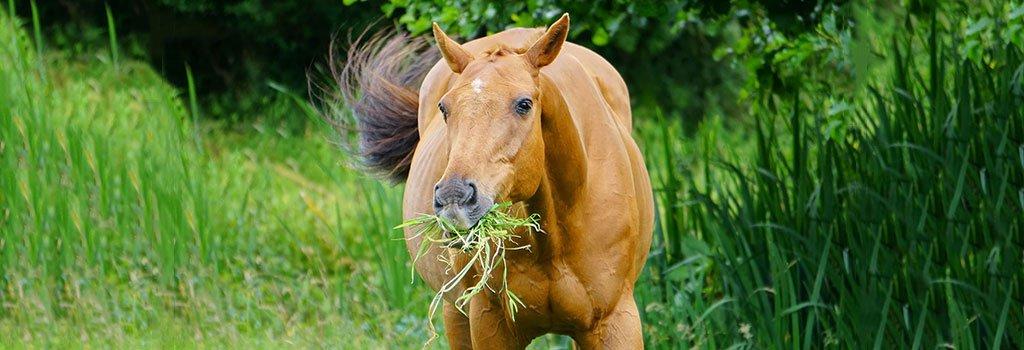 Slowfeeder voor je paard