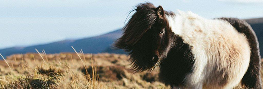Paard scheren